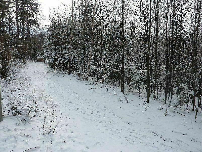 Lesní pozemek 964 m2 Frenštát pod Radhoštěm, okr.