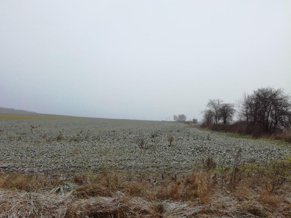 Pozemek (orná půda) v k.ú. Plinkout, obec Dlouhá